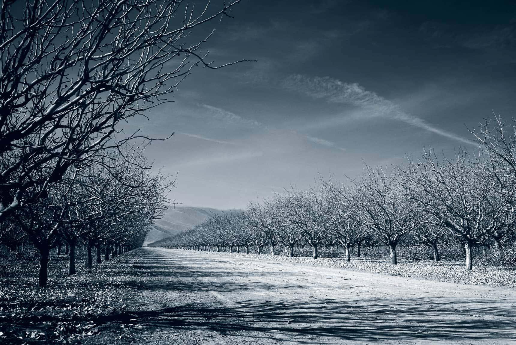 Professional Landscape Photography Large Format B Amp W Images
